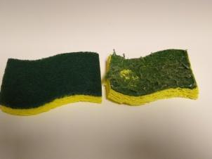 Scratchy Sponge
